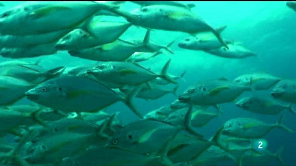 Jara y sedal - El tiburón de Amanay - VER AHORA