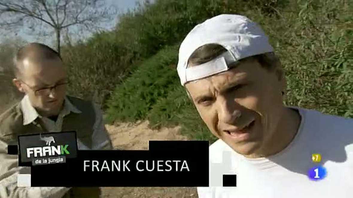 Frank de la jungla busca a la coguta