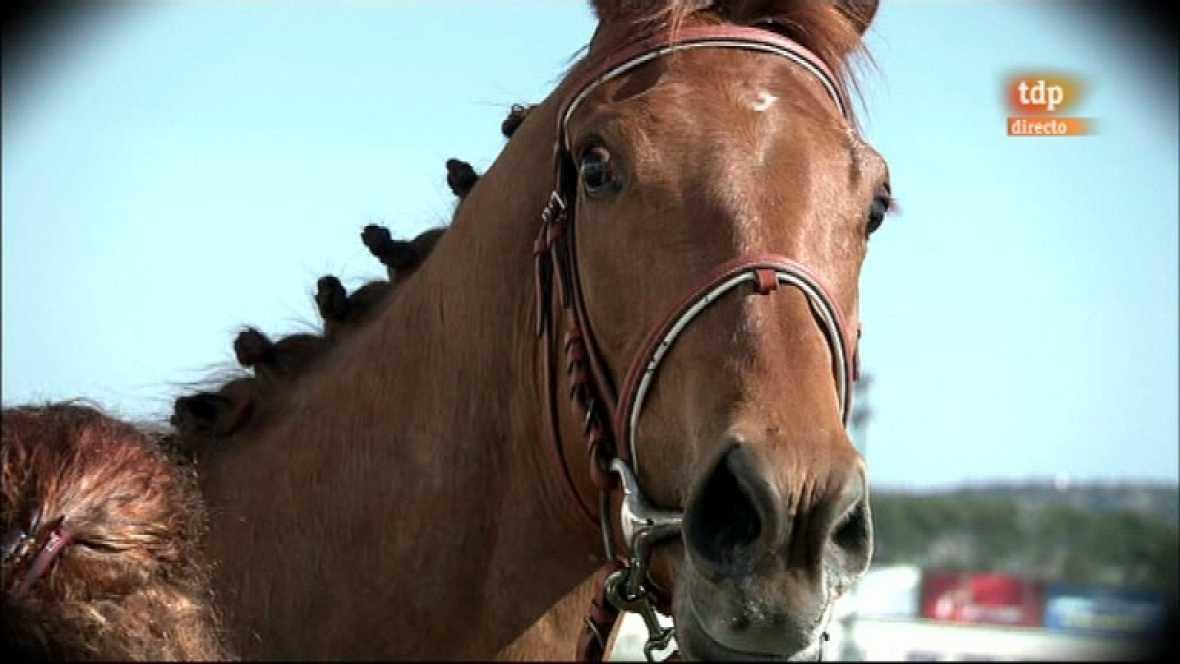 Turf - Carreras de caballos - 25/03/12 - Ver ahora
