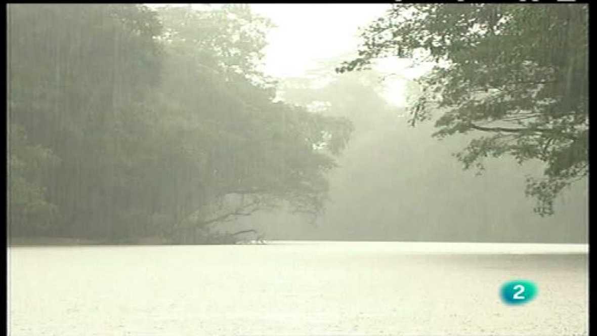 El bosque protector - El bosque tropical. Un paraíso en peligro - ver ahora