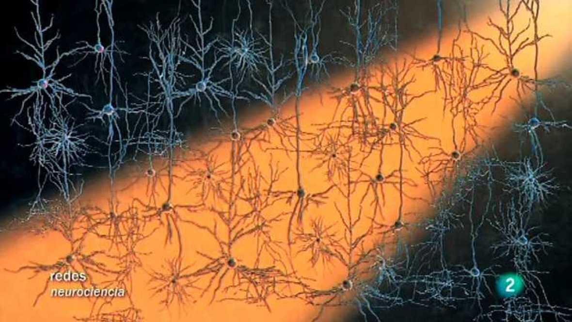 Redes - Modificar el cerebro con luz  - ver ahora