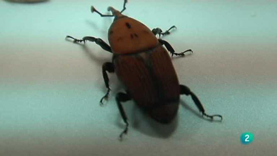 El escarabajo verde - Escarabajo de destrucción masiva - Ver ahora