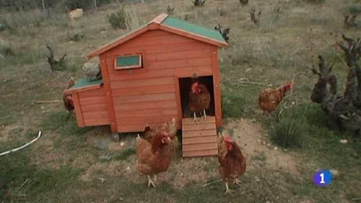 Repor - Revolución en la granja - ver ahora
