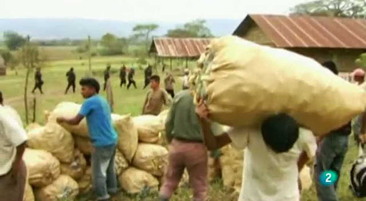 BIOCOMBUSTIBLES, ENEMIGOS DE LOSINDÍGENAS DE GUATEMALA