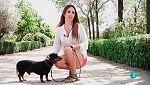 Más que perros y gatos - T2 - Capítulo 9