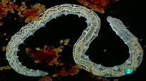 El río invisible