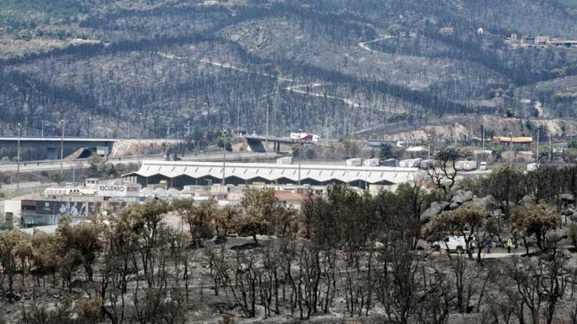 Los bosques quemados pueden tardar hasta 30 años en recuperarse