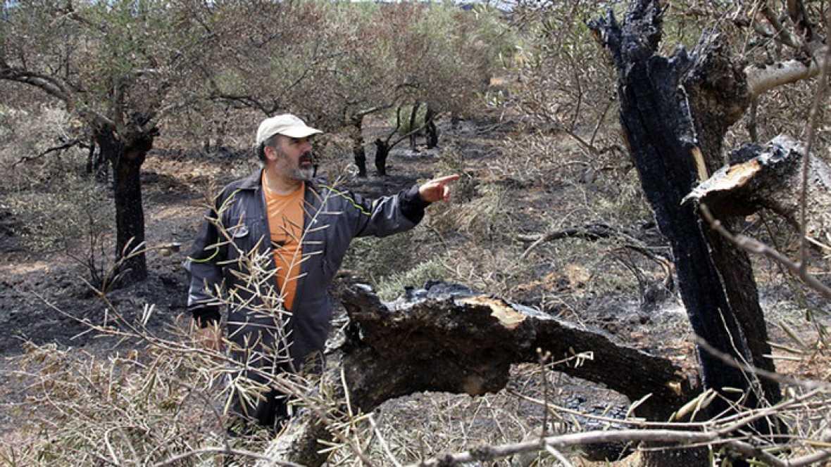En la sierra de Gata se han quemado 600 hectáreas