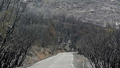 Ya está casi controlado el incendio de La Gomera