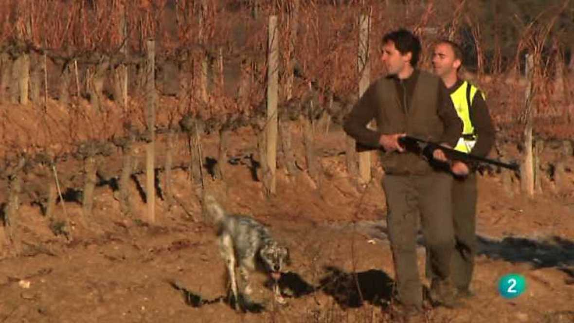 Jara y sedal - Campeonato de España de caza menor con perro - ver ahora