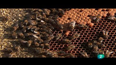 El escarabajo verde - Un mundo sin abejas