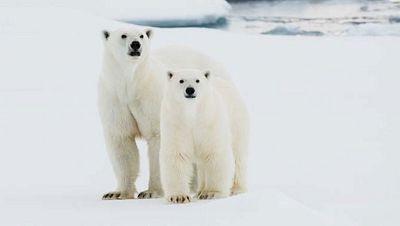 """Greenpeace lanza la campaña """"Salvar el Ártico es salvar mucho más"""""""
