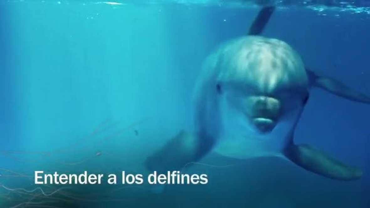 Redes - Entender a los delfines - avance