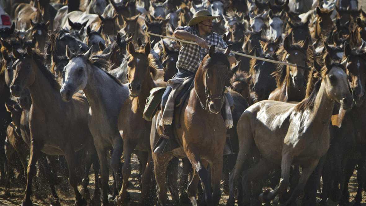 """Los ganaderos de Almonte llevan a cabo la tradicional """"saca de yeguas"""""""