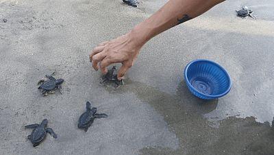 Un joven de Costa Rica muere tras defender a las tortugas, en grave peligro de extinción