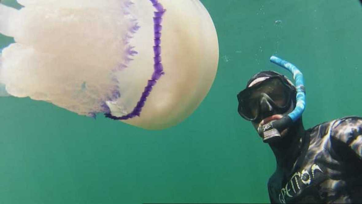 Una aplicación para saber si hay medusas en las playas