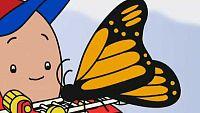 Sorpresas y mariposas