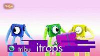 Tribu itrops