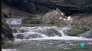 Las aguas salvajes