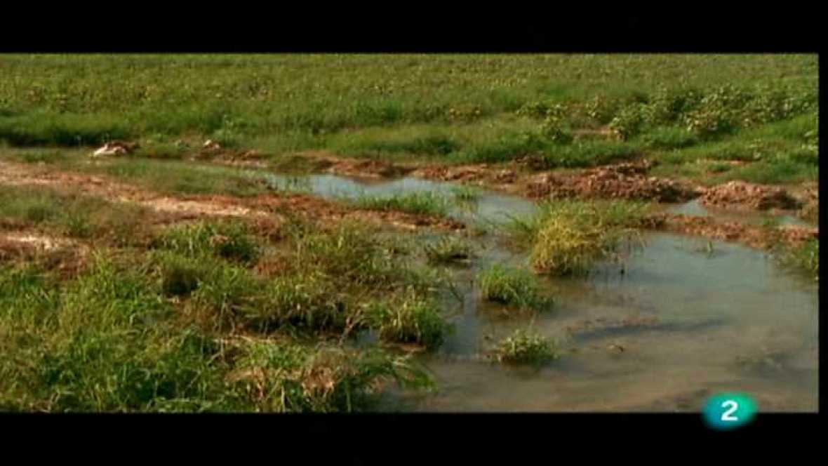 Agua - El curso del río - ver ahora
