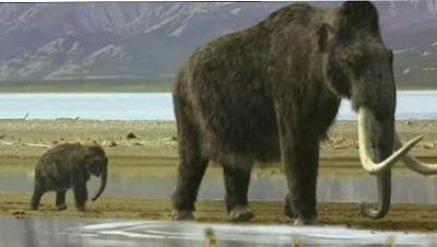 Nueva teoría sobre la desaparición de los mamuts