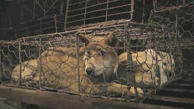 Desarticulada en China una red acusada de comercializar ilegalmente con animales