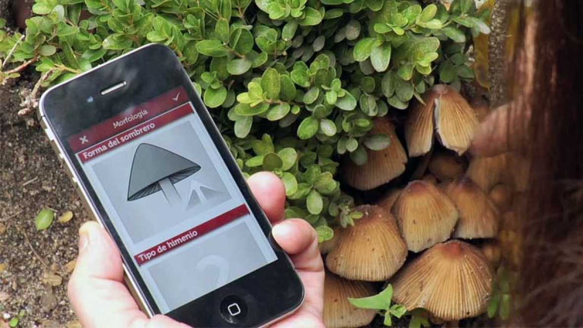 'FungiNote', una aplicación móvil del CSIC que ayuda a identificar hongos
