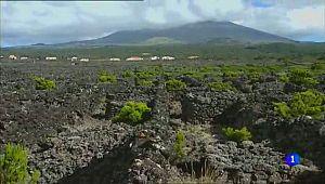 Criaçao Velha - Vinhas do Pico - Azores