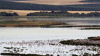 El parque de Doñana cumple 50 años