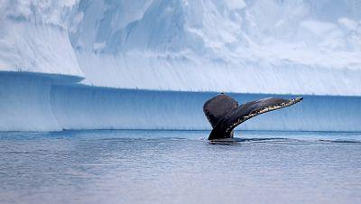 Japón no podrá seguir cazando ballenas en el Antártico