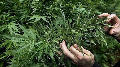 Uruguay venderá marihuana en las farmacias a menos de un euro el gramo