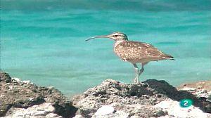Animalia Tuamotu. Pájaros y peces
