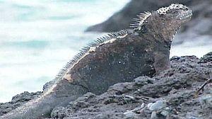 Hombres y lobos de mar (Ecuador)