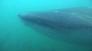 Paraísos submarinos: Costa rica y la Gran Barrera de Coral australiana