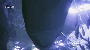 Capitán Q - Tiburones