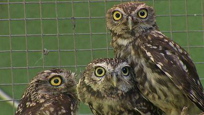 Visita al único centro español especializado en la recuperación de aves nocturnas