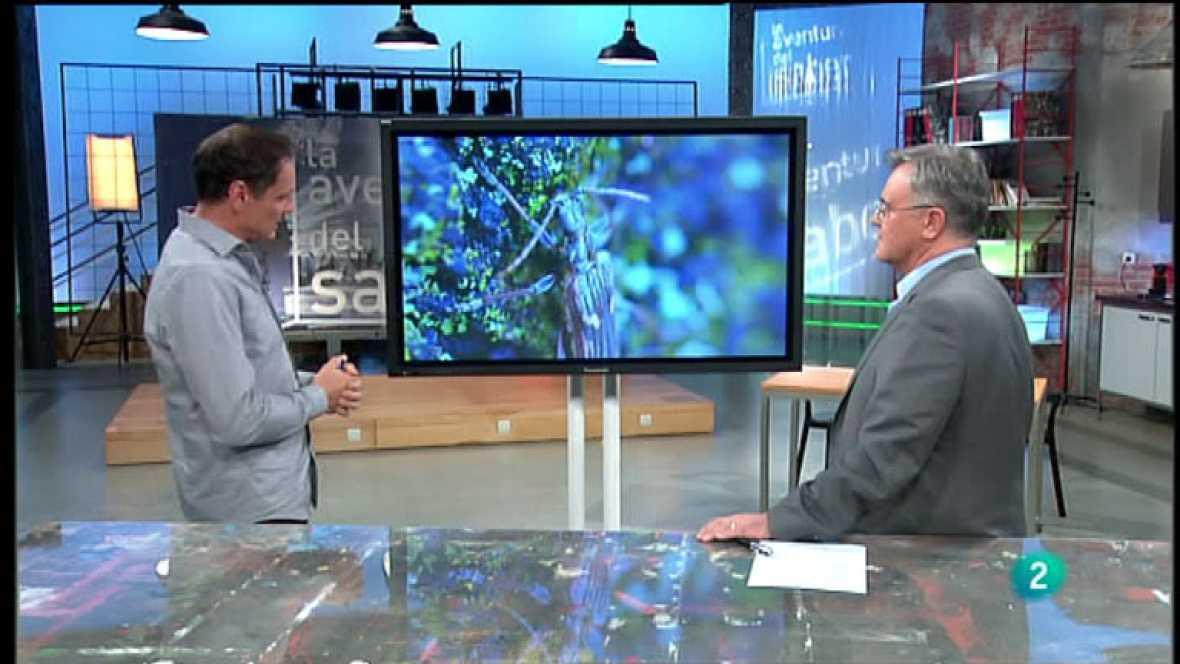 La Aventura del Saber. José Manuel Crespo. Insectos