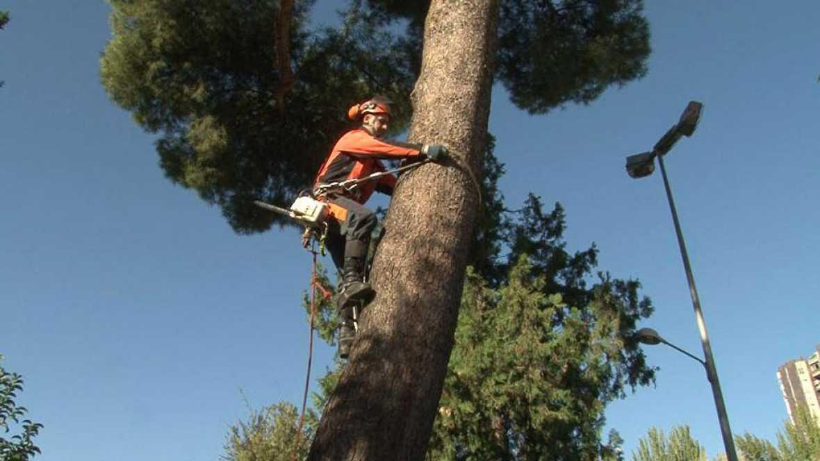 Comando actualidad - Mantenimiento - Saneamiento de árboles