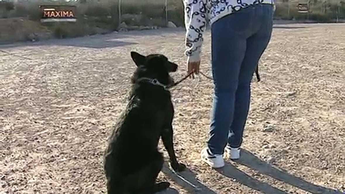 Las mujeres víctimas de violencia de género pueden aumentar su protección con los perros escolta