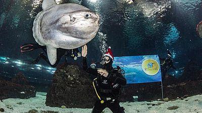 Marc Coma felicita la Navidad entre tiburones