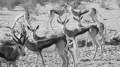 Fauna - Los animales contrarreloj