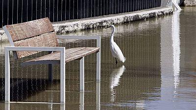 El caudal del Ebro baja mientras más de un centenar de personas siguen desalojadas