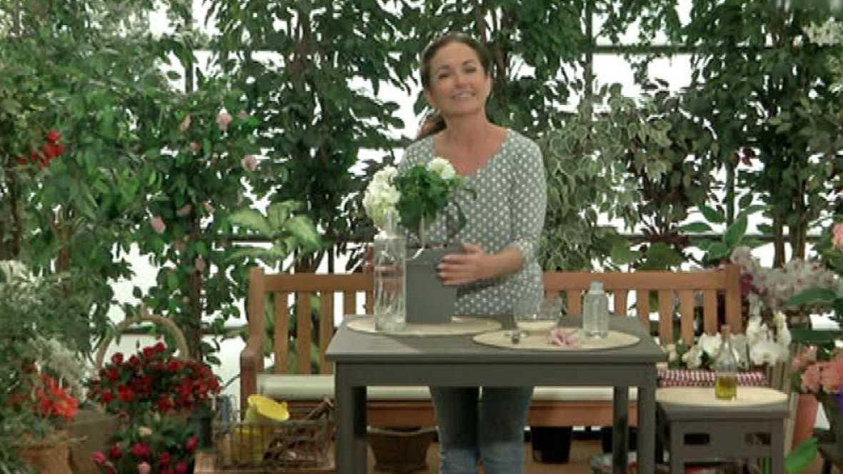Cómo mantener las plantas bien regadas