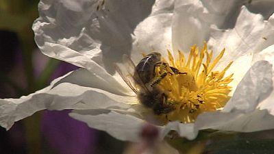 Un hombre en estado grave tras ser acribillado por medio millar de abejas en un pueblo de Salamanca