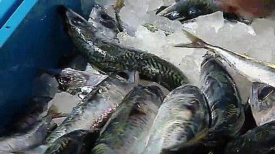 Los pescadores de Gran Canaria defienden que sus capturas no están contaminadas por el fuel del barco ruso