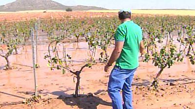 Al menos 2.000 hectáreas de cultivos dañados tras la granizada en Montealegre del Castillo