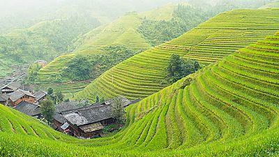 Grandes documentales - Patrimonio de la humanidad: arrozales en terraza en las monta�as de la Cordillera - ver ahora