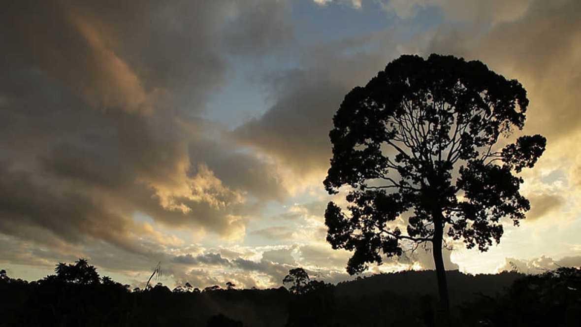 La noche temática - Bancarizar la Naturaleza - ver ahora