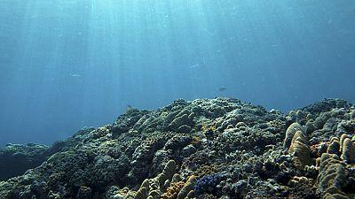 El día mundial de los océanos nos recuerda la importancia de conservar nuestros mares