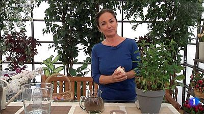 Los consejos de Maxi: Riego subterr�neo para las plantas